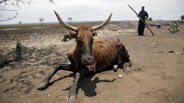 La sequía amenaza con el hambre a 14 millones de personas en el sur de África