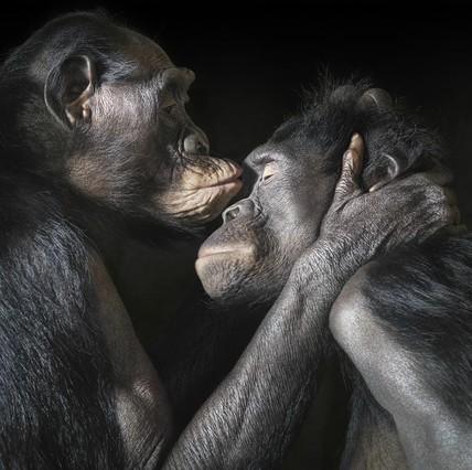 Tim Flach fotografía el lado más humano de los animales en More than human