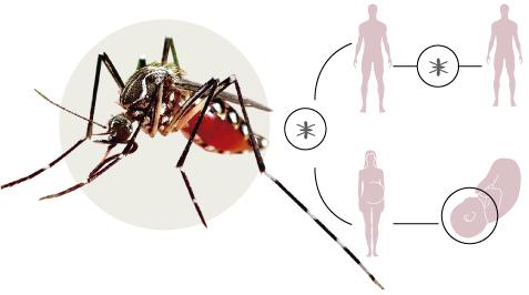 El virus Zika al m�n