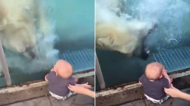 Un oso polar ataca a un bebé en un zoo