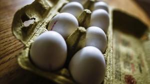zentauroepp39548996 fis02 dresde alemania 04 08 2017 vista de huevos en su c170809120712