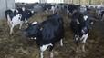 Alimentos, metano y cambio climático