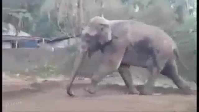Un elefante irrumpe en una ciudad india