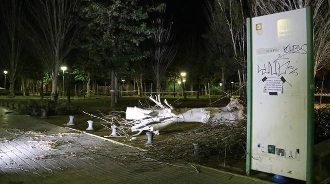 Árbol caído a causa del viento en Salou.