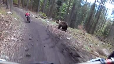 El susto de un oso a un ciclista que han visto 7 millones de personas por youtube