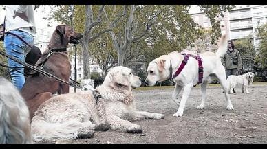 Un Turó Park rehabilitado y sin perros