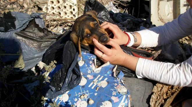 Rescatat un cadell abandonat en una bossa d'escombraries amb el morro lligat