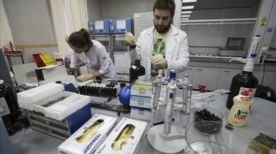 Així operava el laboratori antidopatge de Moscou