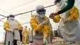 La UE destina 24,4 milions d'euros a impulsar la investigació contra l'Ebola