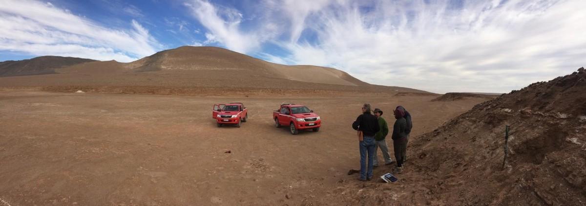 Arbres al desert d'Atacama