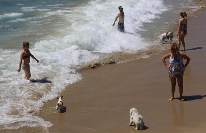 Tramo de la playa de Llevant de Barcelona habilitado para perros, el verano pasado.