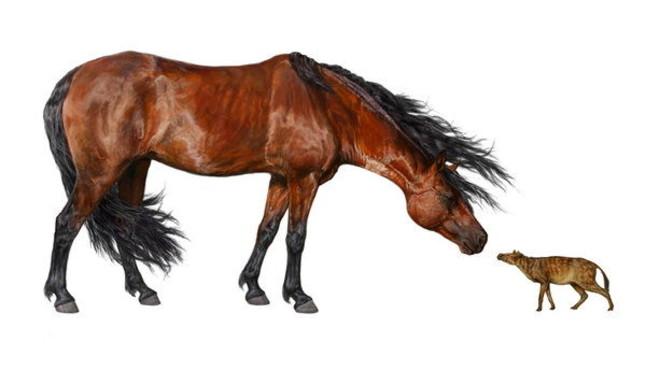 Un cavall