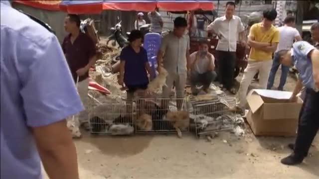 La Xina celebra el seu festival de carn de gos entre extremes mesures de seguretat
