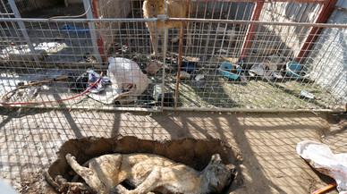 Els dos únics animals del zoo de Mossul, un os i un lleó, a punt de morir de gana
