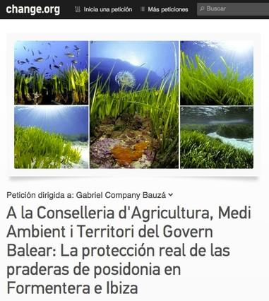 Las praderas de posidonia de Formentera y Eivissa están en peligro