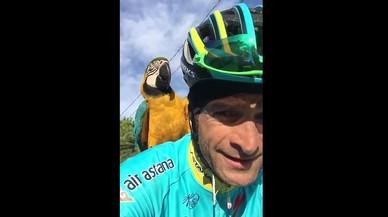 Nova entrega de les aventures del ciclista Scarponi amb el seu lloro Frankie