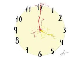 Tic-tac neuronal