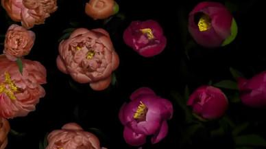 La primavera, vista a través de 8GB de fotos