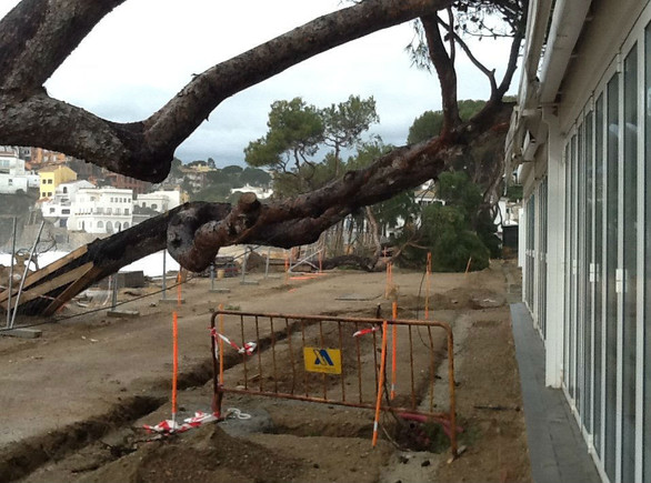 Un árbol caído en una calle de Palafrugell.