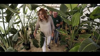 El PSOE andaluz lamina a los sanchistas en las primarias