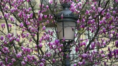 Comença la primavera