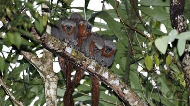Descobertes gairebé 400 noves espècies de vertebrats i plantes a l'Amazònia