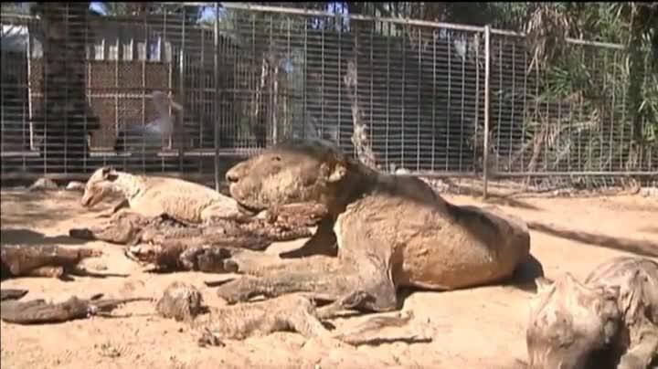 El zoo de Jan Yunis, en Gaza, donde decenas de animales han muerto de hambre.