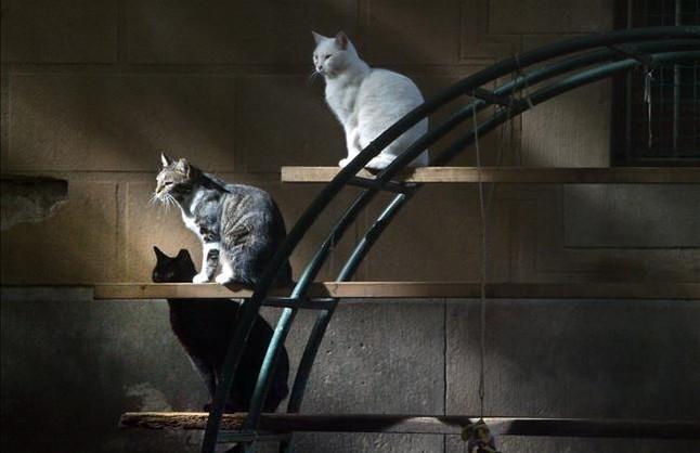 Nuevo mercadillo para ayudar a los gatos callejeros