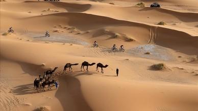 Participantes del año pasado, entre camellos.