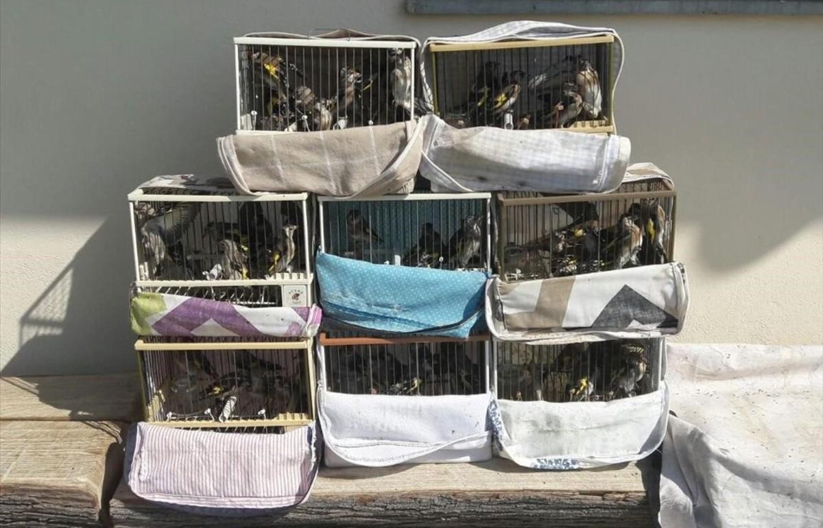 decomisados 65 jilgueros en jaulas en el mercadillo de