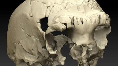 Descobert a Portugal un estrany crani humà de fa 400.000 anys