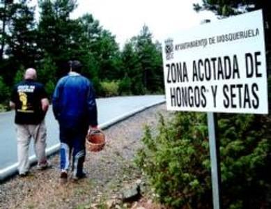 Un pueblo de Teruel gana 12.000 euros al año con una tasa por coger setas