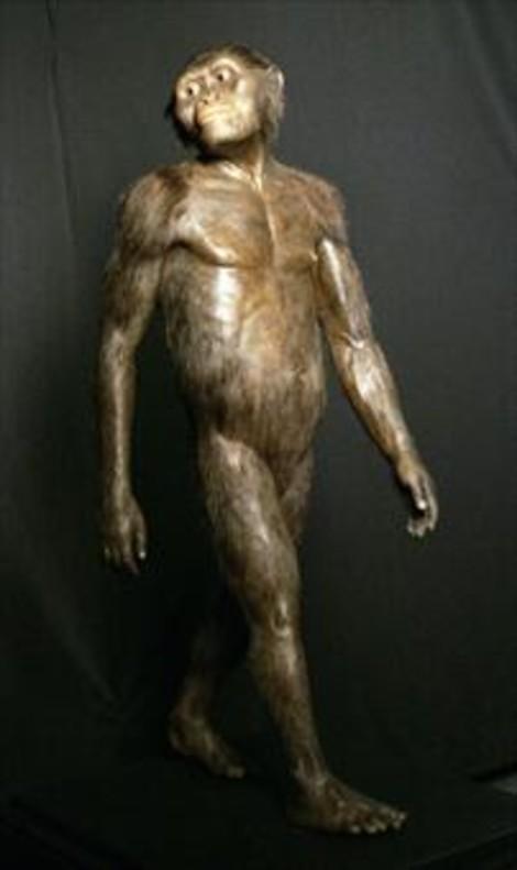 Los primeros 'Homo' habitaron en zonas áridas y de pastizales