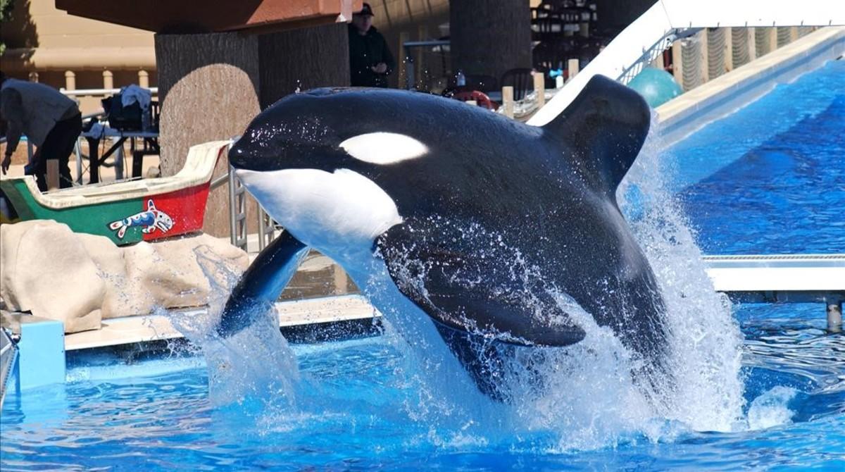 SeaWorld dejar� de criar orcas en cautividad