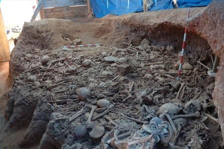 Imagen de parte de los miles de restos óseos prehistóricos hallados en la excavación de La Sagrera.