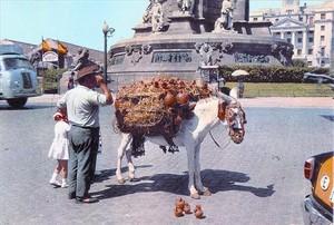 Un burro carregat amb objectes de ceràmica a la barcelonina plaça de Colom, l'estiu del 1963.