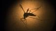 Florida informa de cuatro posibles casos de zika aut�ctono en el sureste de EEUU