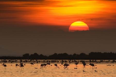 Flamencos y otras especies, en el delta del Ebro.