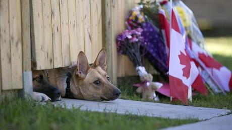 Los dos perros de Nathan Cirillo, el militar asesinado por un yihadista el miércoles en Otawa asoman bajo la puerta de su vivienda.