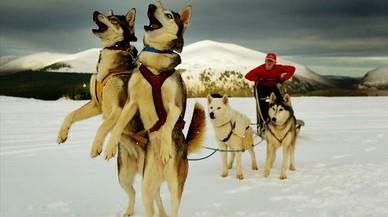 Diversos llocs de l'Antàrtida tindran noms de gossos d'expedicions australianes