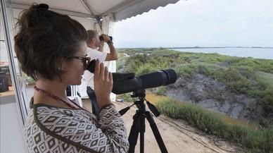 Observaci�n de aves en el marco del Delta Birding Festival.