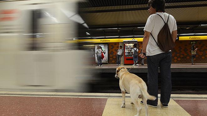 Los perros ya viajan en el metro de Barcelona