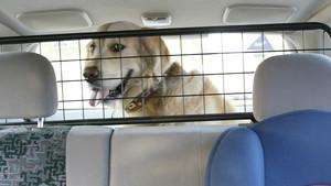 Qué hacer cuando nos encontramos a un perro encerrado en un coche