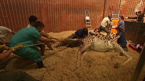 zentauroepp26264014 veterinaris tv3171030184930