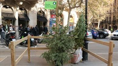 Barcelona inicia la recollida d'arbres de Nadal