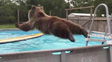 Bruiser, el oso pardo piscinero