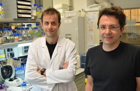 Descubierto un mecanismo general que acelera el desarrollo tumoral