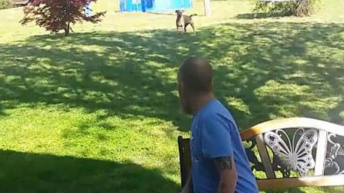Momento de la llegada del perro al jardín donde le esperaba su dueño.
