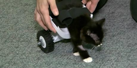 Cassidy, con la silla de ruedas que le ha dado una nueva oportunidad.