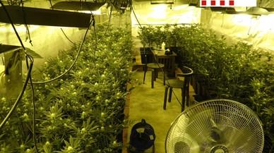 Desarticulada una organització que cultivava marihuana a Barcelona